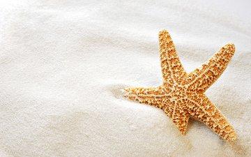 макро, песок, пляж, звезда, морская звезда
