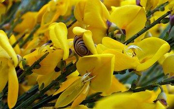 цветы, насекомые, улитка, желтые