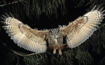 ночь, сова, лес, полет, крылья, птица, филин