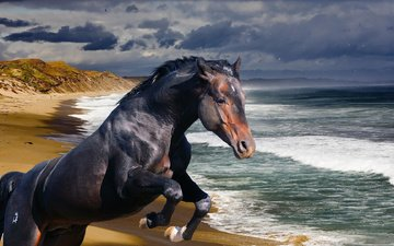 лошадь, берег, волны, море, океан, конь, жеребец
