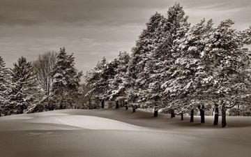 небо, деревья, снег, лес, зима, мороз, сосны, зимний лес, сугроб