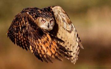 сова, полет, крылья, птица, филин