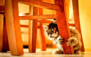котенок, пушистый, стул