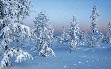 снег, природа, новый год, лес, зима, мороз, ели, сугробы, зимний лес