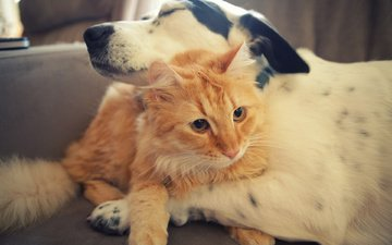 dog, care, friendship, hugs, red cat