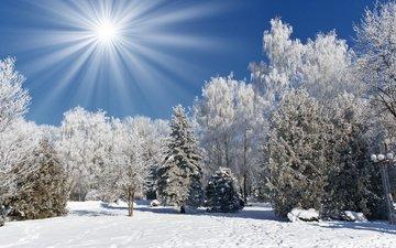 небо, свет, деревья, солнце, снег, природа, зима, лучи, мороз, иней, зимний лес