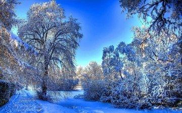 деревья, снег, природа, зима, утро, мороз, зимний лес