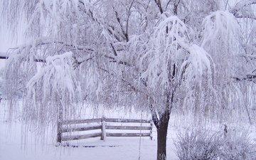 снег, дерево, зима, ветки, мороз, иней, забор, зимний лес