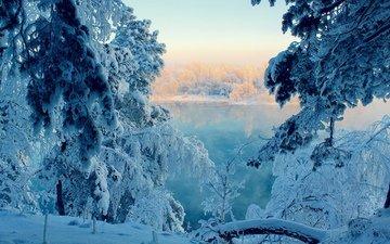 деревья, река, снег, природа, елка, зима, ветви, мороз, зимний лес