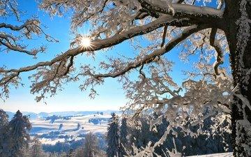 горы, солнце, снег, дерево, зима, ветки, мороз, швейцария, зимний лес