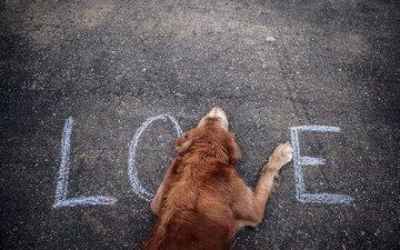 собака, любовь, асфальт, слово, влюбленная