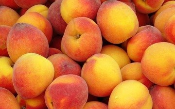 фрукты, много, персики, спелые, сочные, сладкие, вкусные
