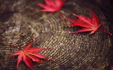 листья, макро, красные, размытость, пенек, осенние