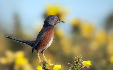 небо, цветы, природа, птица, птичка