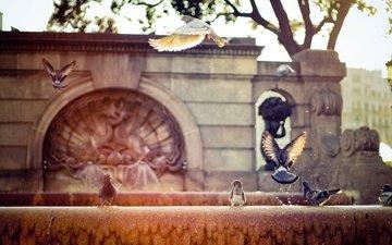 фонтан, голуби