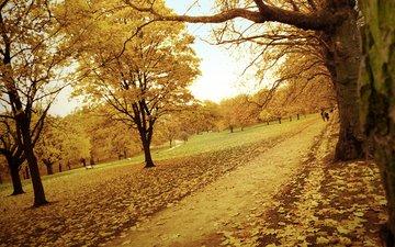 дорога, деревья, желтый, лес, листья, парк, осень, тропинка