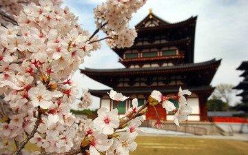 цветы, природа, ветви, лепестки, пагода, япония, дом, сакура