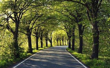 дорога, деревья, асфальт