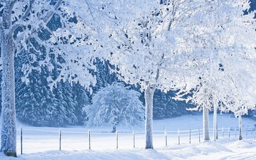 снег, лес, зима, тропинка, сугробы, зимний лес