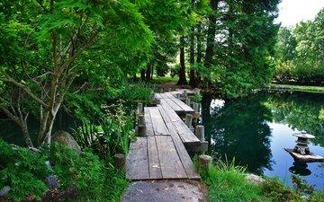 деревья, озеро, парк, лето