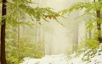 деревья, снег, лес, листья, зима, ветви, дымка