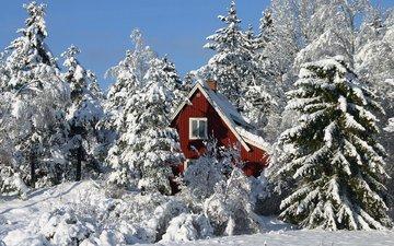 деревья, снег, зима, сосны, домик, ели, сугробы, зимний лес, в лесу