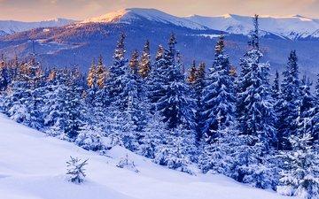 горы, снег, зима, мороз, сосны, ели, зимний лес