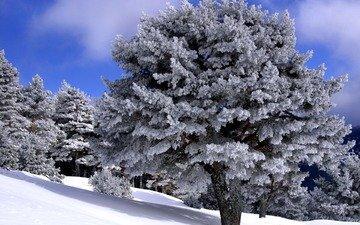 деревья, снег, мороз, зимний лес