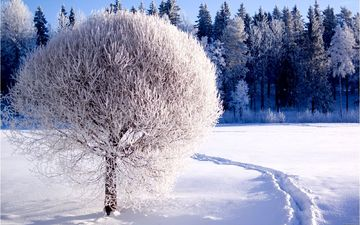 снег, дерево, лес, зима, тропинка, сугробы, зимний лес