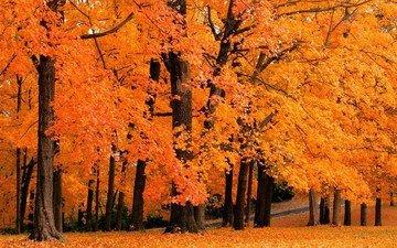 деревья, природа, листья, парк, осень