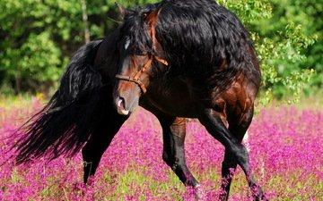 цветы, лошадь, лес, лето, конь, грива, жеребец, лошад