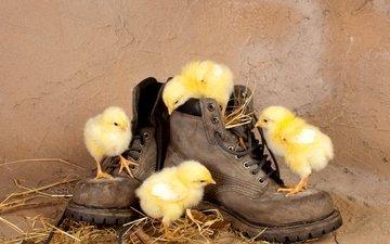 птицы, любопытство, солома, ботинки, птенцы, цыплята