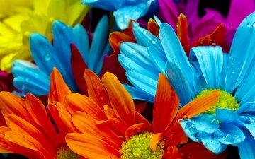 цветы, макро, роса, капли, красные, красочные, голубые, яркие, желтые, оранжевые