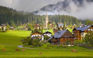 горы, деревня, австрия, дома, альпы, коровы