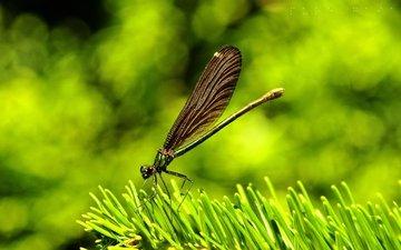 трава, природа, макро, крылья, насекомые, стрекоза
