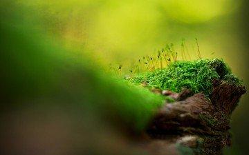 трава, природа, зелень, макро, мох