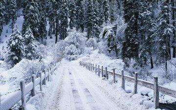 дорога, мостик, лес, зима, речка, зимний лес