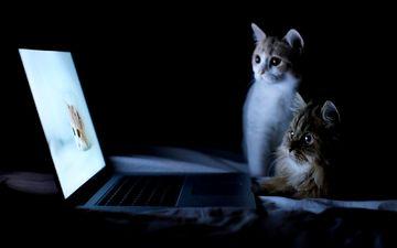 ночь, кошки, ноутбук