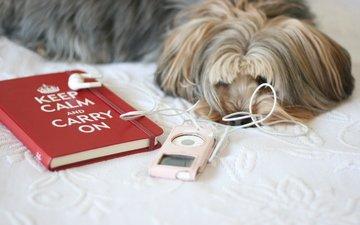 надпись, музыка, собака, розовый, плеер, блокнот, йорк, книжка, йоркширский терьер