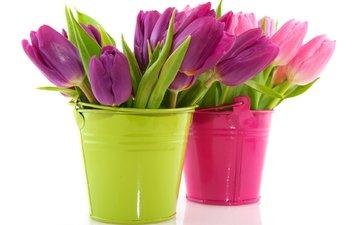 cvety, tyulpany, vedra, gorshki