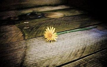 дерево, цветок, одуванчик, ступени