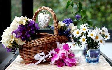 цветы, ромашки, корзинка, цикламены, гиацинты, фрезии