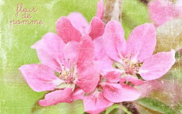 цветы, открытка