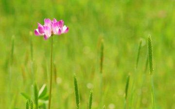 трава, природа, зелень, цветок