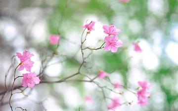 cvety, vesna, nezhnost, cvetenie, rozovye, svet