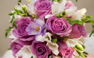 cvety, fioletovyj, rozy, buket