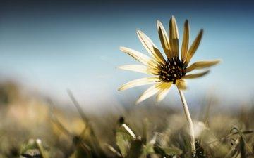 фокус камеры, цветок, лето
