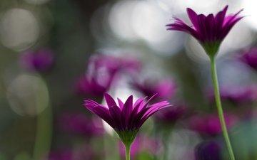 cvety, cvetenie, rasteniya, priroda, stebli