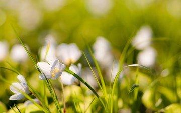 cvety, trava, rasteniya, priroda, foto, boke, розмытость
