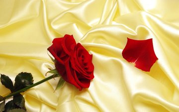 роза, лепесток, шелк